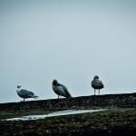 birds in the morning